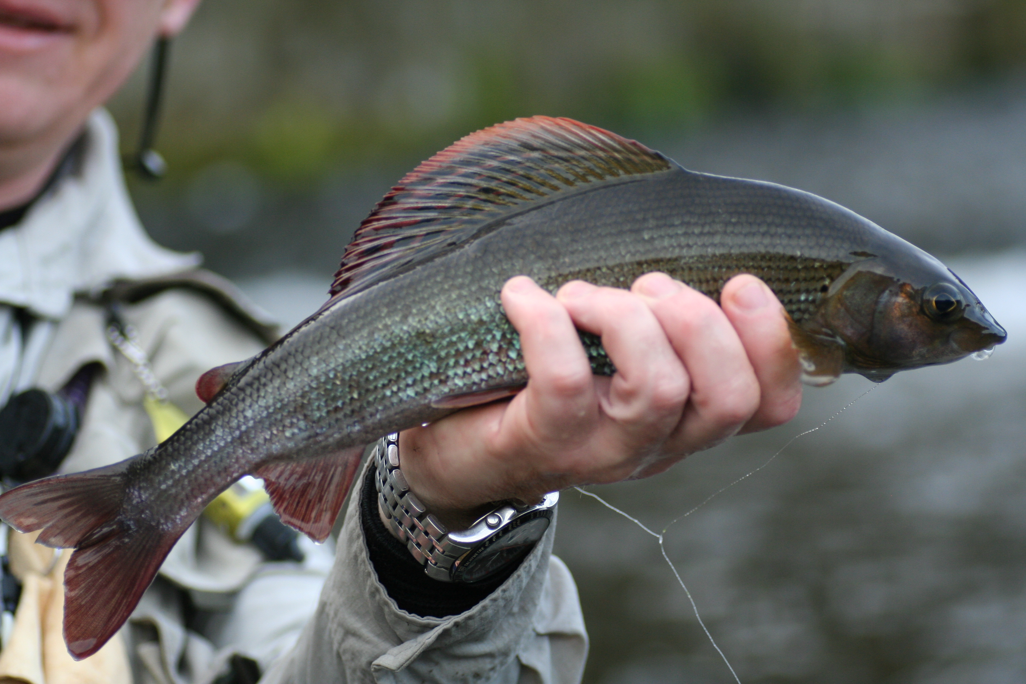 dave downie fishing, Fly Fishing Bait